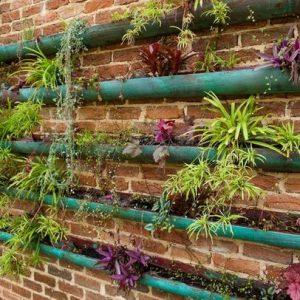 kebun vertikal garden menggunakan pipa memanjang.