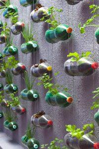 vertical garden menggunakan botol bekas.